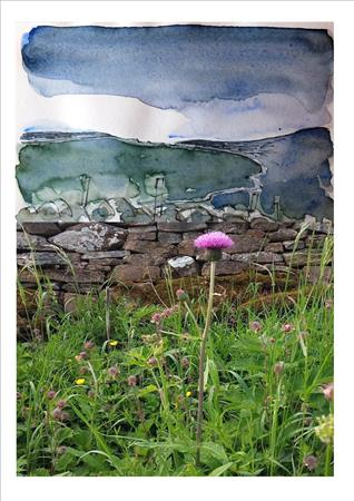xhardrigg edge buttercups billys button melancholy thistle